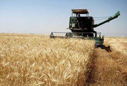 استان کردستان مقام دوم تولید گندم کشور را کسب کرد