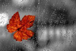 کردستان تا ۲ هفته آینده بدون باران است